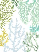 Budding Vertical Coral II Framed Print