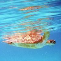 Underwater Depths I Framed Print