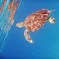 Underwater Depths II Framed Print