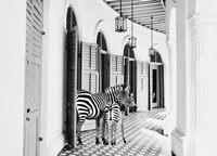 Zebra Hotel Fine Art Print