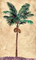 Coconut Tribal Palm II Framed Print