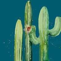 Natural Desert Cactus On Blue II Framed Print