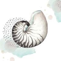 Turquoise Ocean Nautilus Framed Print