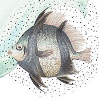 Coastal Fish I Framed Print