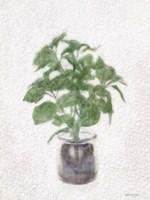 Basil Jar Fine Art Print