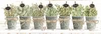 Herbs in a Row Framed Print