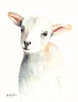 Lamb of God I Framed Print