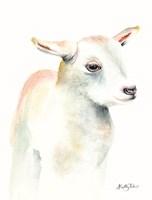 Lamb of God II Framed Print