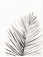 Organic Botanical I Framed Print