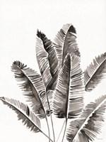 Organic Botanical III Framed Print