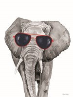 Looking Cool Elephant Framed Print