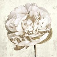 Gilda I Fine Art Print