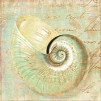 Beach Nautilus I Framed Print