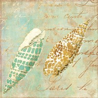 Little Shells Framed Print