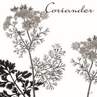Flowering Herbs Coriander Framed Print