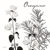 Flowering Herbs Oregano Framed Print