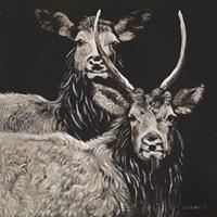 Two Woodland Deer Fine Art Print