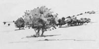 Treeline Sketch I Framed Print
