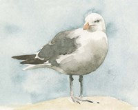 Simple Seagull I Framed Print