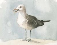 Simple Seagull II Fine Art Print