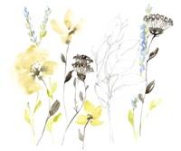 Wild Flowers & Contour II Framed Print
