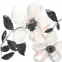 Black & Blush Anemone I Framed Print