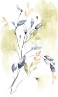 Sweet Leaves II Framed Print