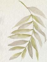 Whispering Palm I Framed Print