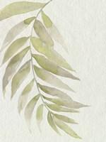 Whispering Palm II Framed Print