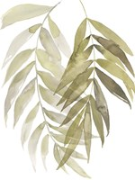 Palm Embrace I Framed Print