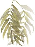 Palm Embrace II Framed Print