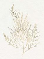 Gilded Algae II Framed Print