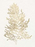 Gilded Algae IV Fine Art Print