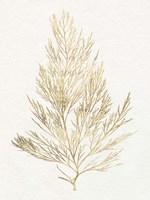 Gilded Algae V Framed Print