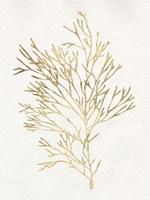 Gilded Algae VII Framed Print