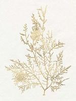 Gilded Algae VIII Framed Print
