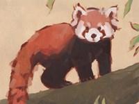 Red Panda I Fine Art Print