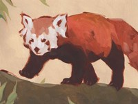 Red Panda II Fine Art Print