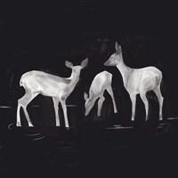 Sophisticated Whitetail I Framed Print
