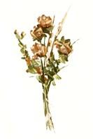 Autumn Roses II Framed Print