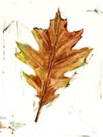 Autumn Leaf Study II Framed Print
