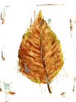 Autumn Leaf Study III Framed Print