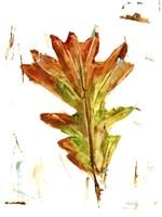Autumn Leaf Study IV Framed Print