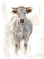 Sunlit Cows I Framed Print