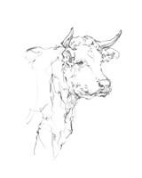 Bovine Quick Study I Framed Print