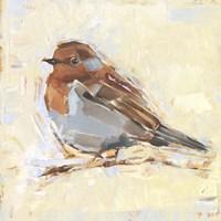 Bird Variety I Framed Print