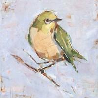 Bird Variety II Framed Print
