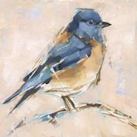 Bird Variety III Framed Print