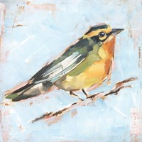 Bird Variety IV Framed Print