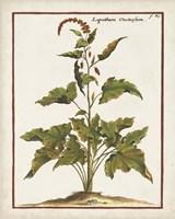 Munting Botanicals VI Framed Print